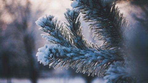 Ветка, снег, зима