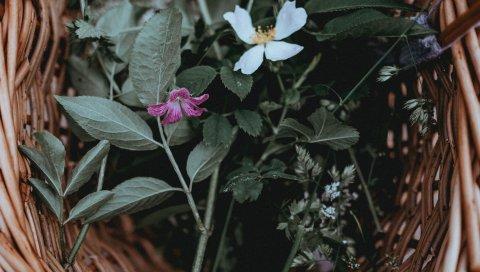 Цветы, корзина, листья