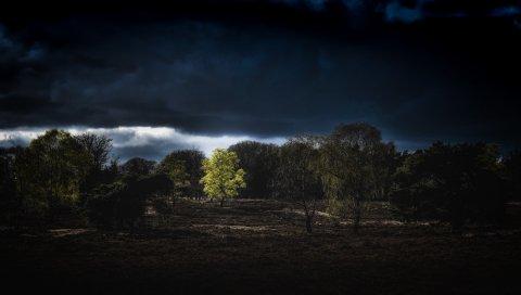 Деревья, облака, земля, ночь
