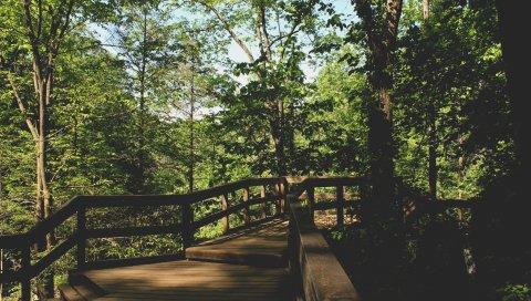 Мост, деревья, листва
