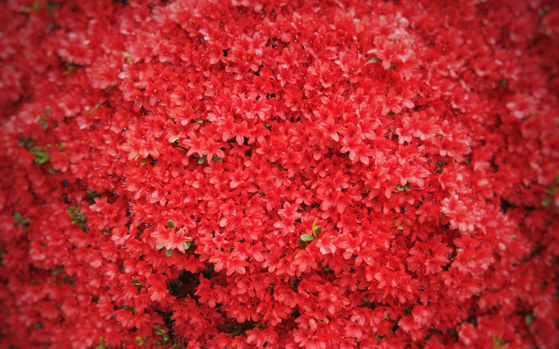 Картинки Цветы, красный, дерево фото и обои на рабочий стол