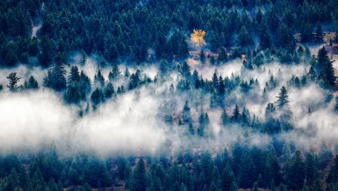 Деревья, туман, вид сверху