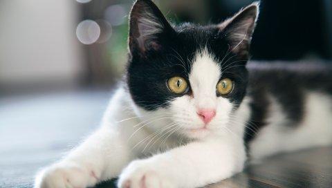 Котенок, кошка, пятнистый