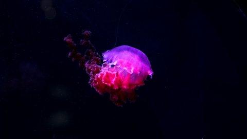 Медуза, свечение, фосфор, подводный мир
