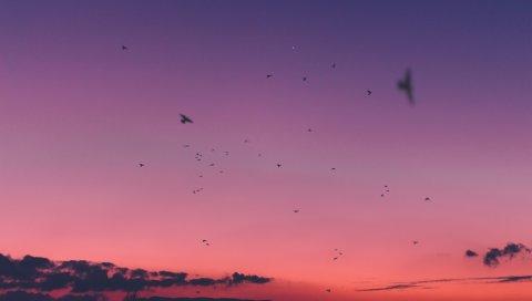 Небо, закат, птицы