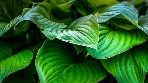 Листья, растения, капли