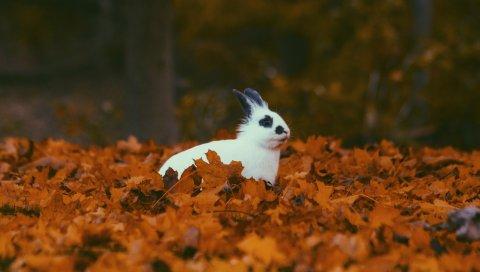 Кролик, осень, листва