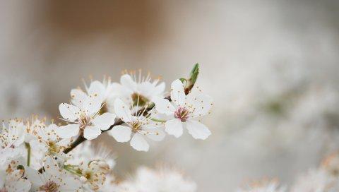 Цветение, весна, дерево