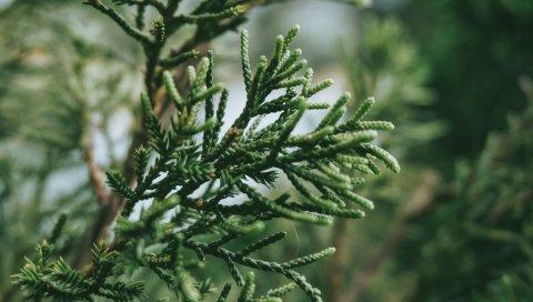 Ветка, растение, зеленый