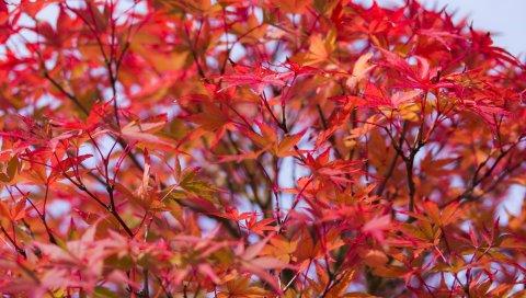 Листья, ветки, дерево