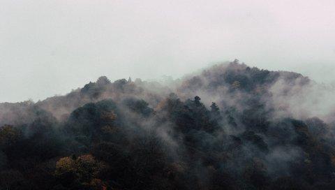 Деревья, туман, верх