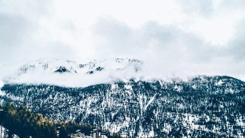 Горы, деревья, туман, снег