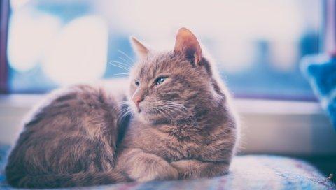 Кошка, ложь, серый