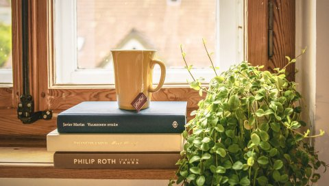 Книга, чашка, чай, подоконник, окно, комнатное растение