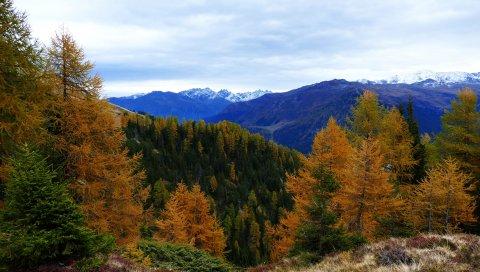 Лес, горы, деревья, осень