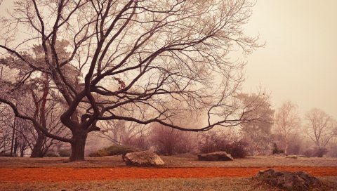 Дерево, осень, листва