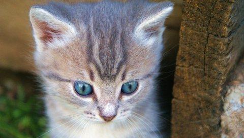 Котенок, морда, милый