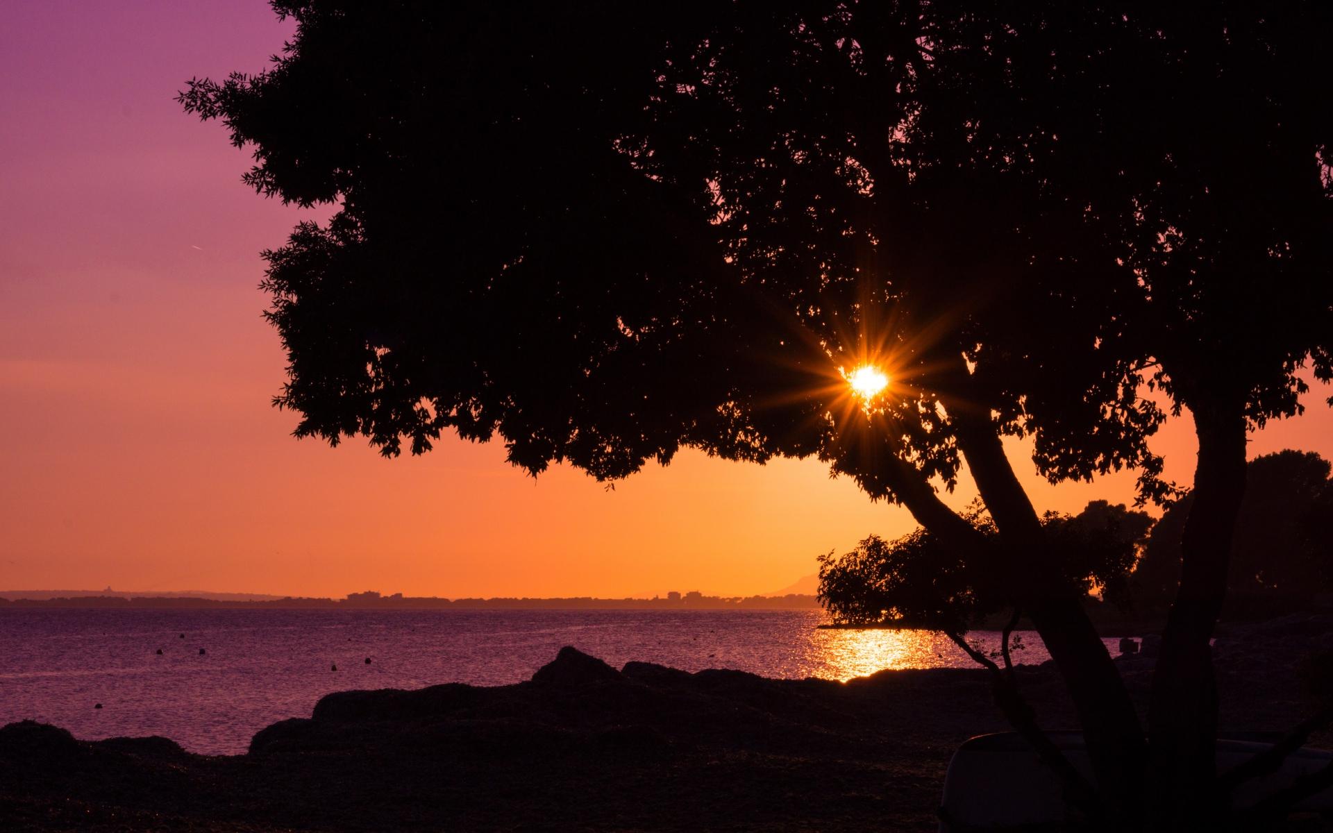Картинки Дерево, закат, пляж фото и обои на рабочий стол