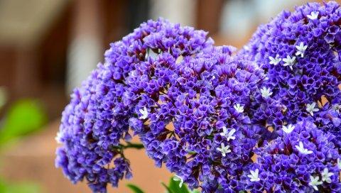 Букет, цветок, фиолетовый