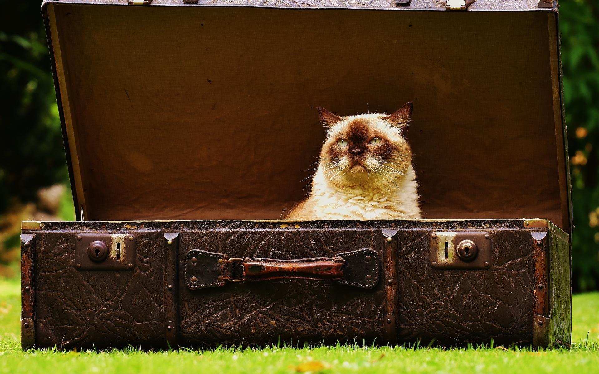Картинки Кошка, чемодан, антиквариат фото и обои на рабочий стол