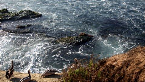 Море, берег, волны, птицы
