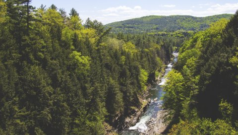 Деревья, ручей, река, гора