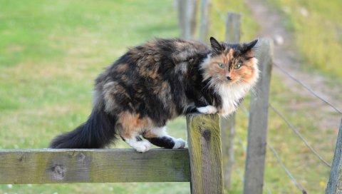 Кошка, пятнистый, прогулка