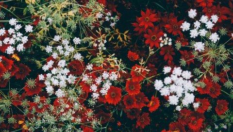 Цветы, трава, украшение