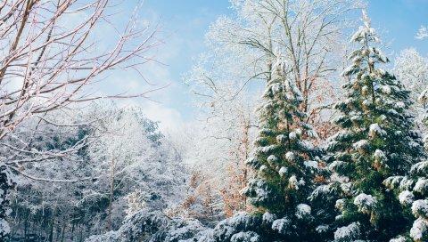 Лес, деревья, зима, снег