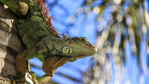 саламандры, рептилии, амфибии