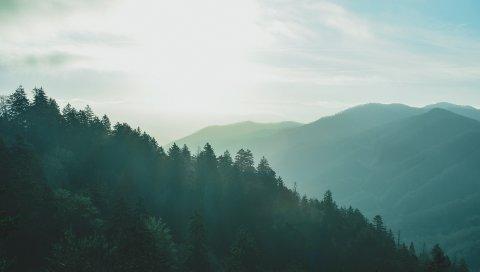 Лес, небо, туман, горы