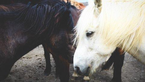 Лошадь, пара, грива