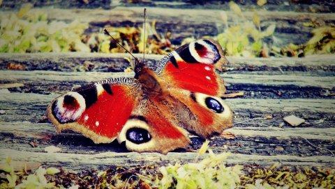 Бабочка, крылья, узоры