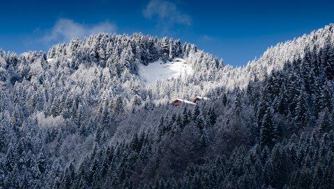 Альпы, горы, снег, деревья