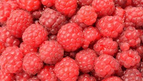 Малина, ягода, спелые, многие