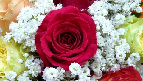 Роза, цветок, бутон, букет, украшение