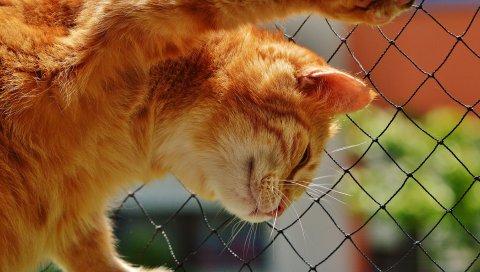 Кошка, красный, сетка, скалолазание