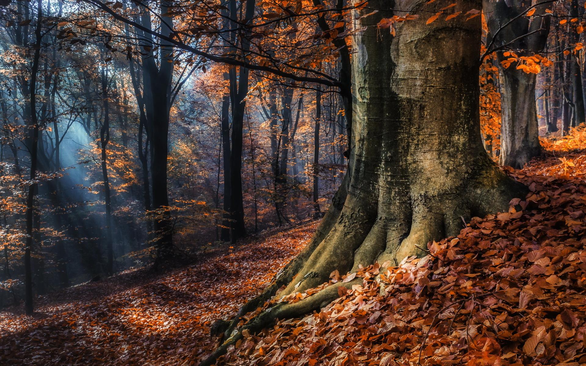 осенний лес фото картинки на рабочий стол этом
