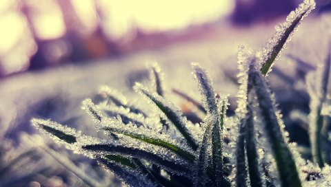 Трава, мороз, лед, крупный план