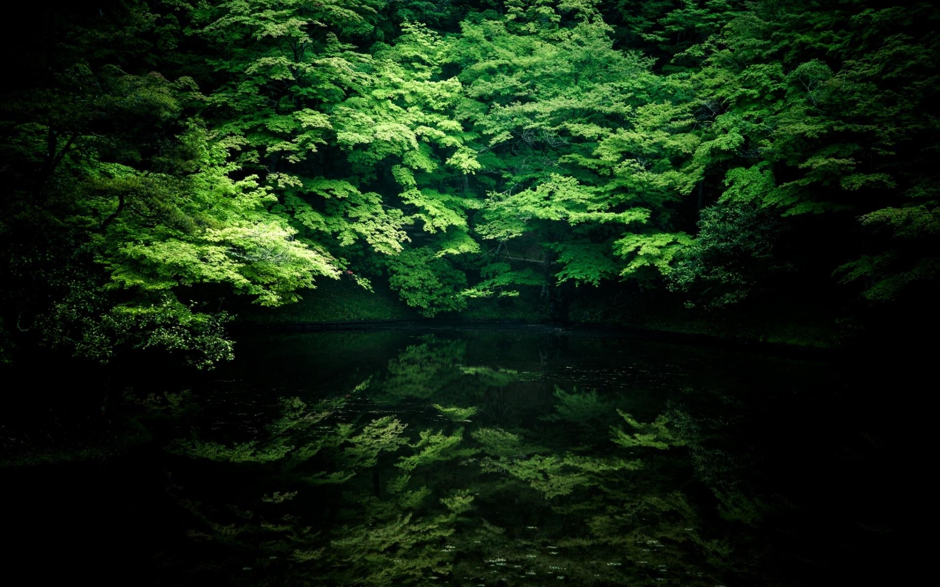 Картинки Деревья, река, тень фото и обои на рабочий стол