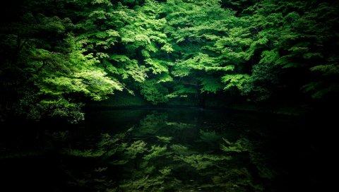 Деревья, река, тень