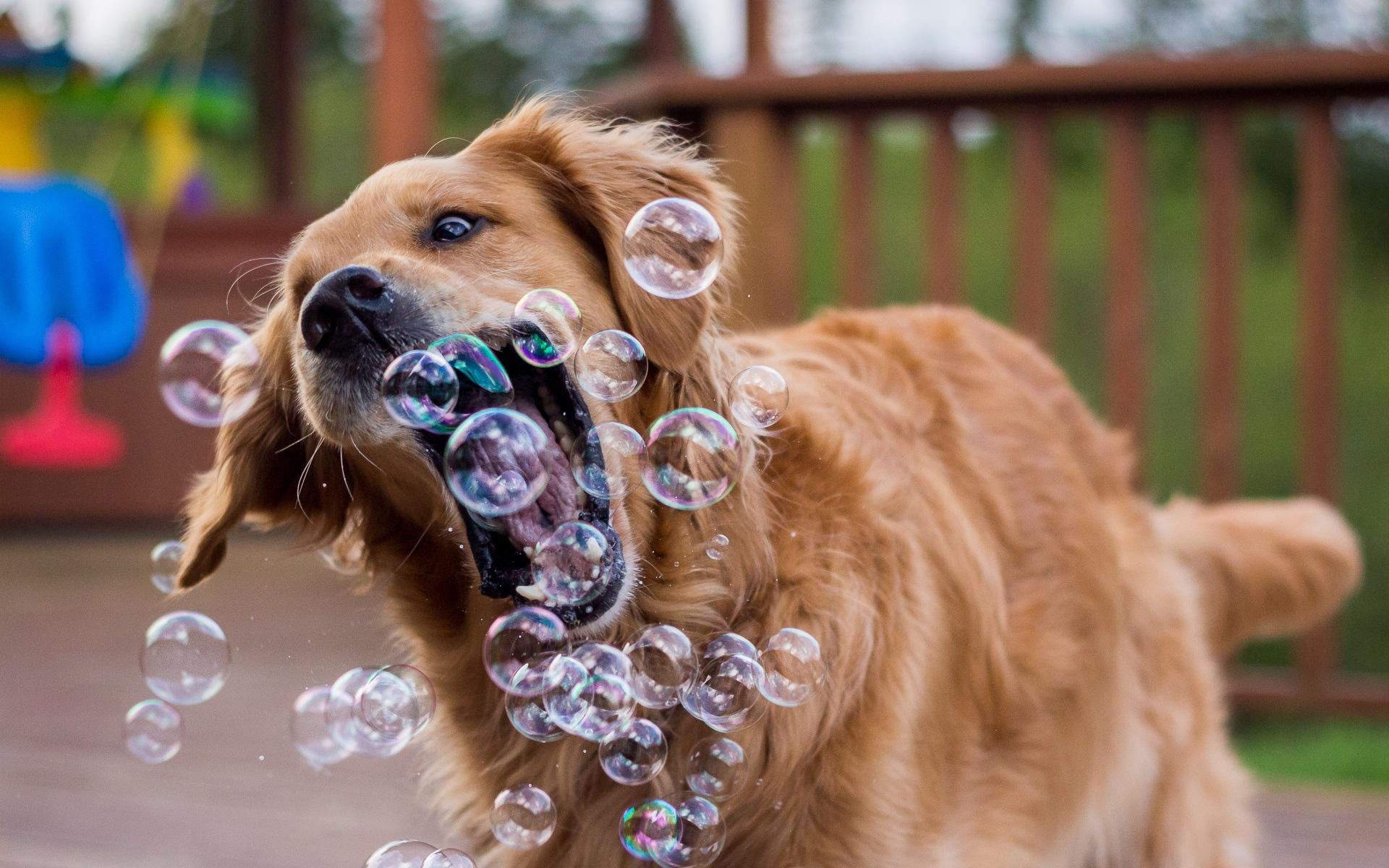 Вышить открытку, картинки прикольные с собаками