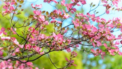 Дерево, цветок, цветение, ветка