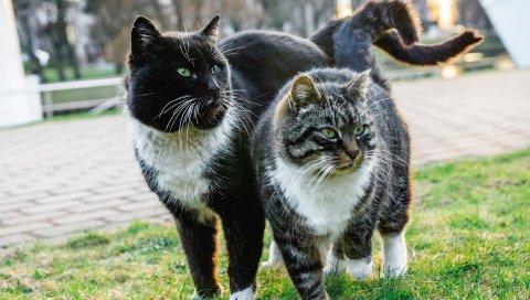 Кошки, пара, весна, пятнистый