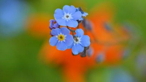 Цветы, макро, размытие, лепестки