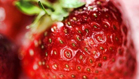 Клубника, ягода, крупный план, спелый
