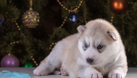 Хриплый, щенок, рождественские шары, ель