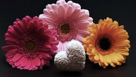 Герберы, цветок, сердце, день Святого Валентина