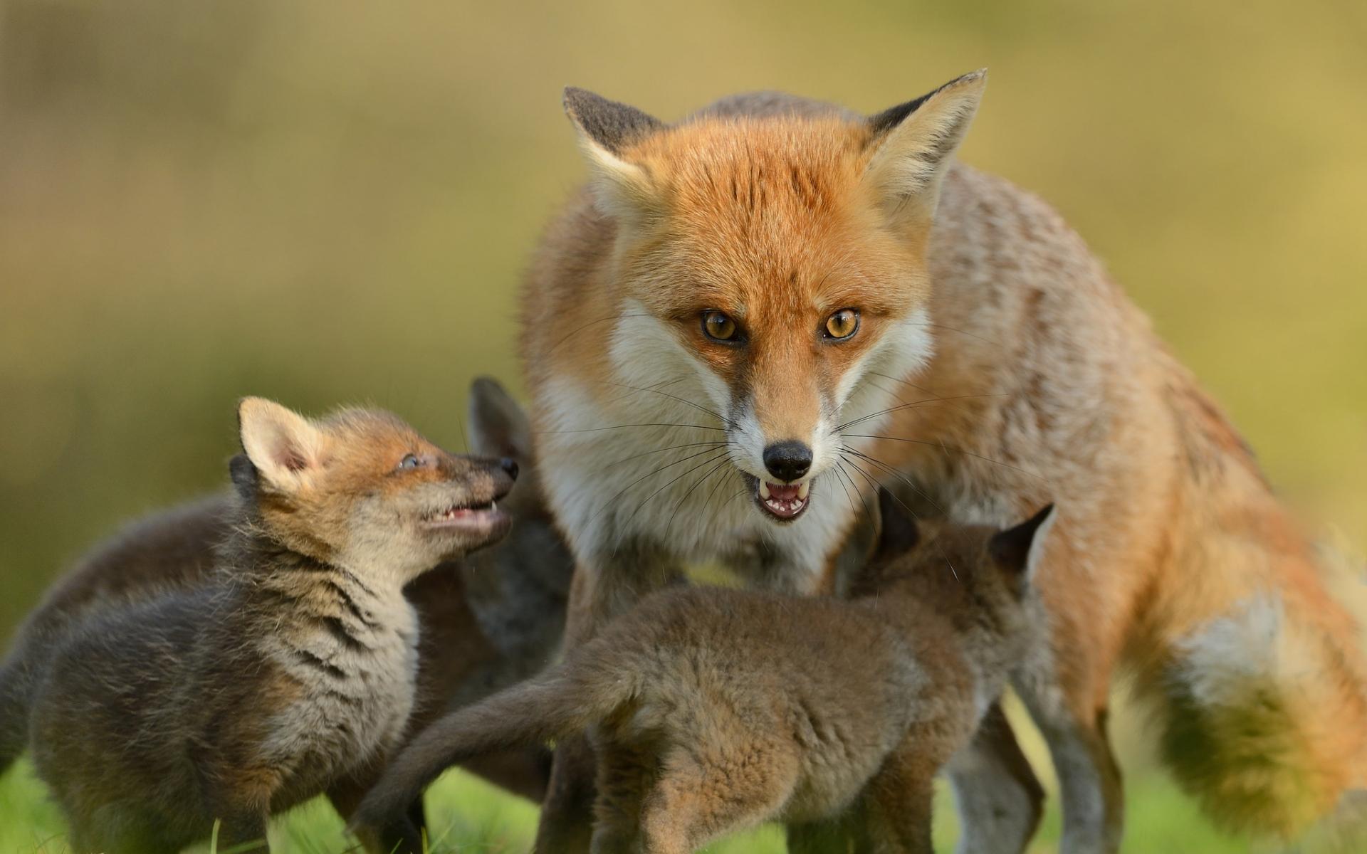 Картинки животных и детенышей животных
