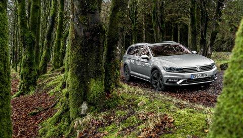 Volkswagen, passat, вид сбоку, мох, лес